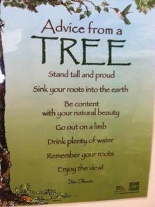 advise from a tree