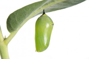 GREEN-COCOON-2-300x199