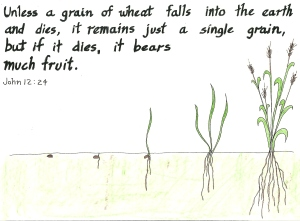 grain-of-wheat-dies-to-bear-much-fruit